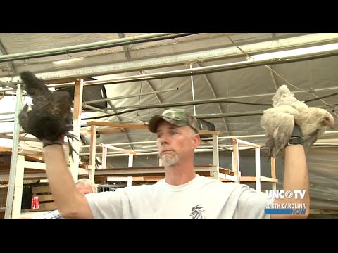 Wicked Chicken Auction | NC Now | UNC-TV