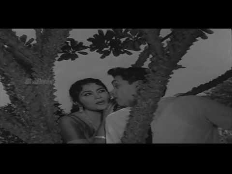 Zamindar Movie (1965) | Palakarinchitene Video Song | Nageswara Rao, Krishna Kumari