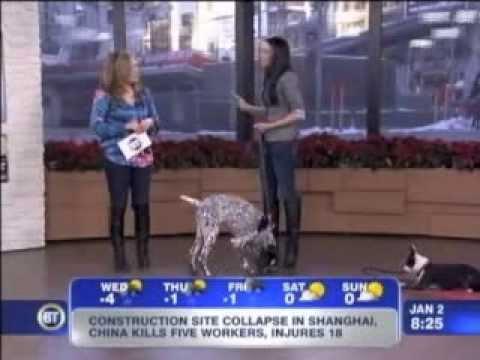 In Dogs We Trust  Breakfast TV January 2 2013