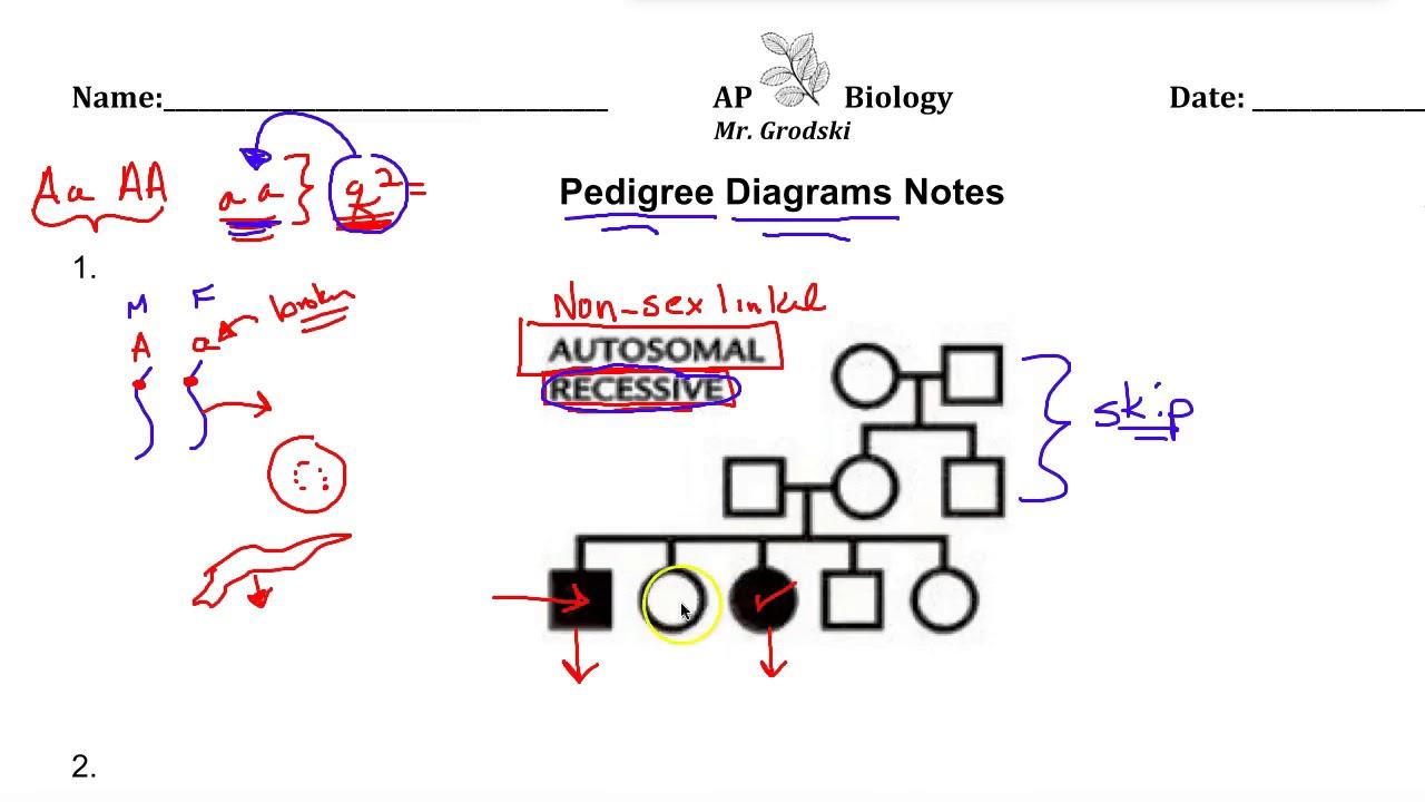 Ap biology pedigree diagram lecture youtube ap biology pedigree diagram lecture pooptronica Gallery