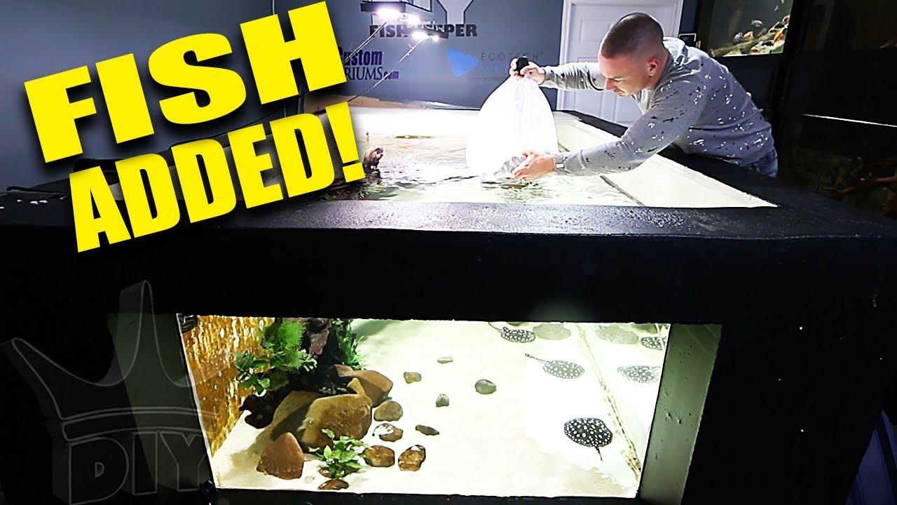 i-added-the-fish-to-the-2-000g-aquarium