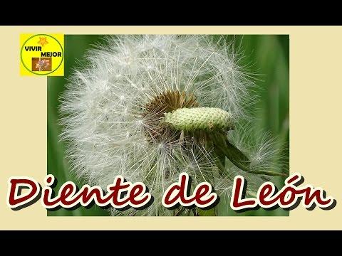 DIENTE DE LEÓN (Taraxacum),  remedios naturales, #16