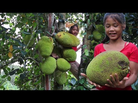 Survival skills: Find Natural jackfruit for food - Natural jackfruit eating delicious