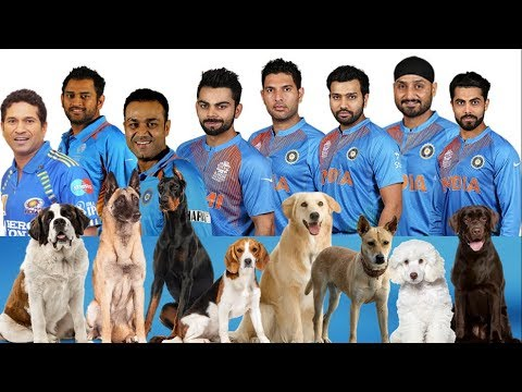 Top 11 Dog Lover Indian Cricketers and their Favorite Dog Breed