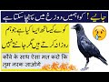 islamic information - islamic lectures | Information of islam - Islamic Videos