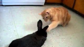Кот и кролик(, 2012-09-09T08:01:52.000Z)