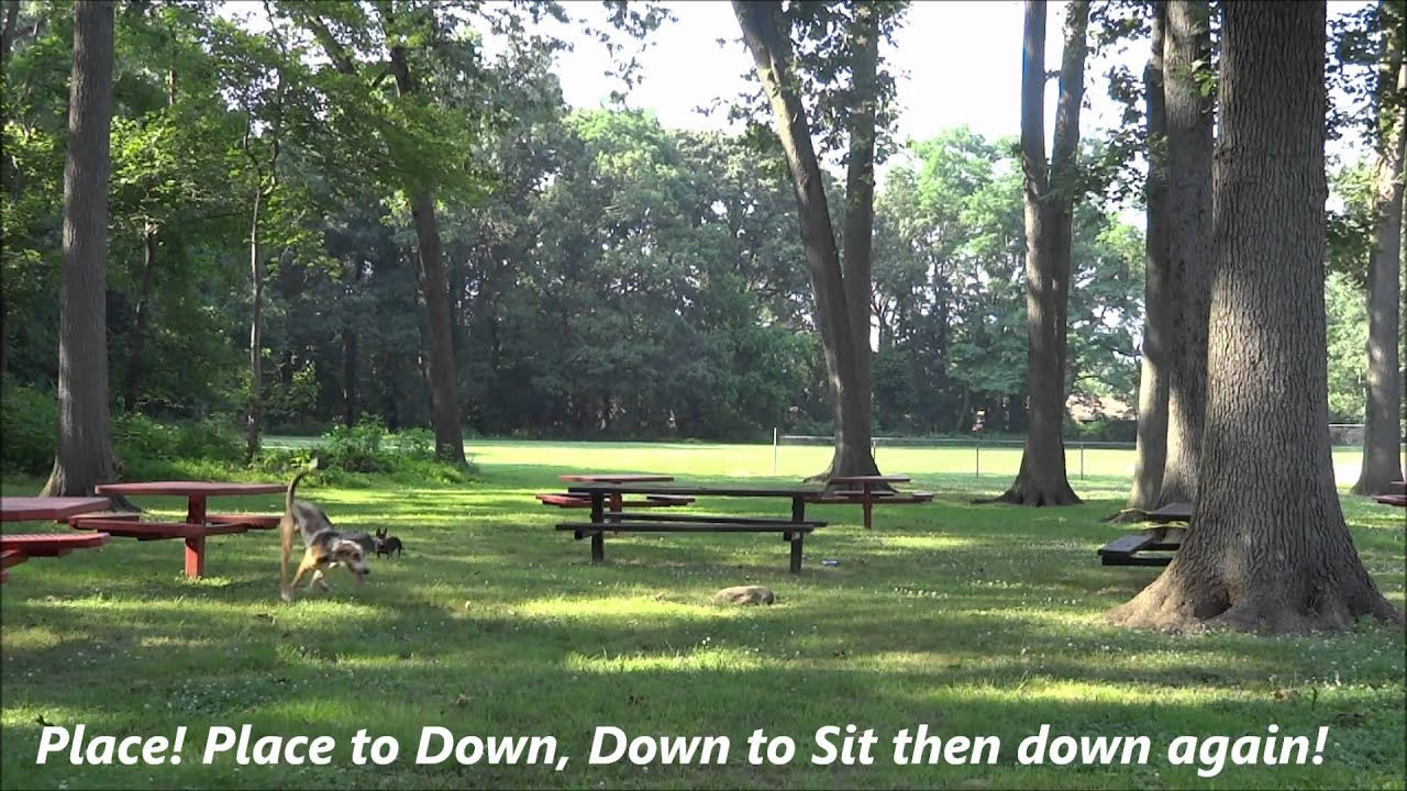 how to train a dog to stay close off leash