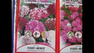 Семена цветов с сильным запахом(Семена цветов с сильным запахом., 2013-04-14T19:06:17.000Z)