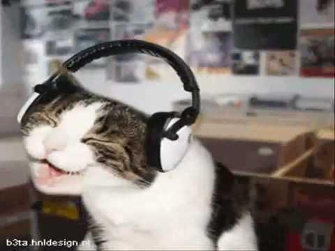 Cat I'm a kitty Cat
