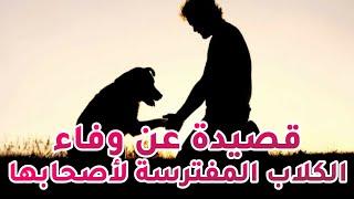 قصيدة عن الكلب المتوحش الذي تَحَمَل َ ألم قص أظافره من أجل حبه ِ لصاحِبِه