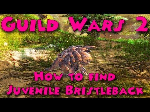 [Full-Download] Gw2 Juvenile Bristleback Ranger Pet