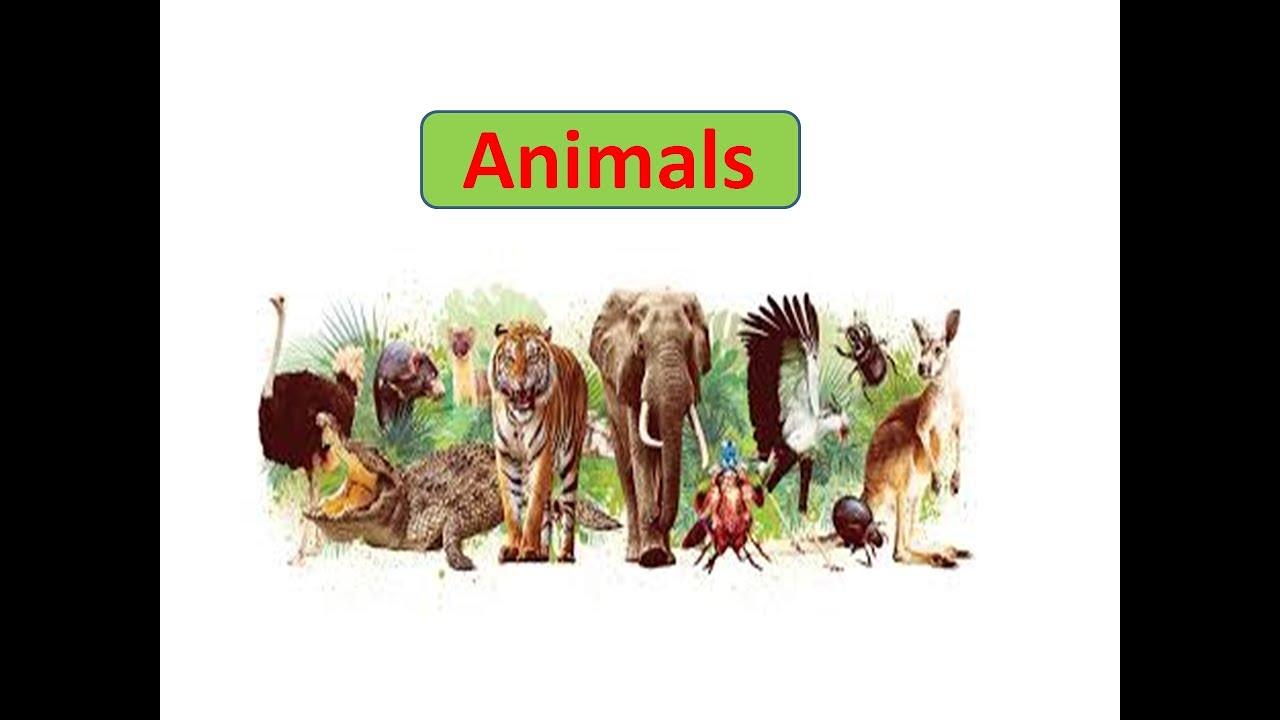 ESSAY ON ANIMALS| ESSAY ON IMPORTANCE OF ANIMAL| SPEECH ON IMPORTANCE OF  ANIMAL