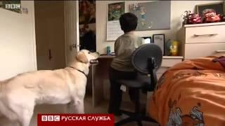 видео: Как собаки помогают глухим детям