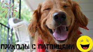 🐶Эти смешные животные! Видео приколы с кошками и собаками заставят вас смеяться до слез😂😂😂😂😂