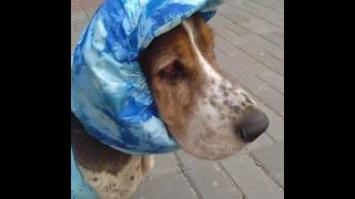 Кепки для собак с длинными ушами