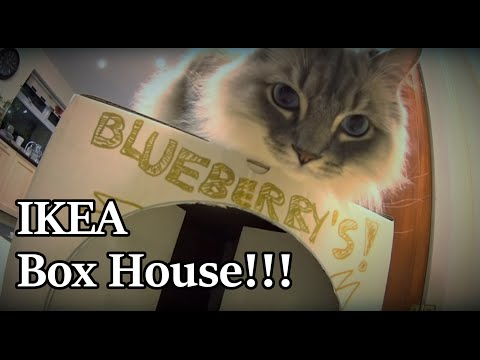 Blueberry IKEA Box House - Ragamuffin Cat