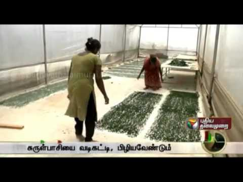 The process of growing Spirulina