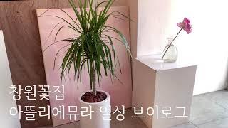 창원꽃집, 개업화분 배송준비, 아뜰리에뮤라