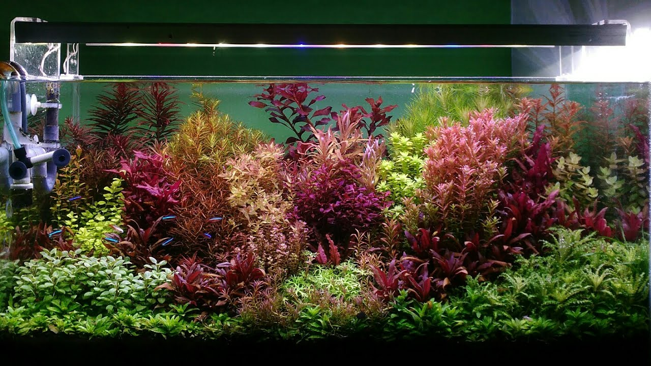 Good StemStyle Aquascape ,Dutch Style Aquascape