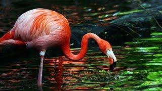 Nature documentary/ wildlife/animals/ Geo wild in hindi