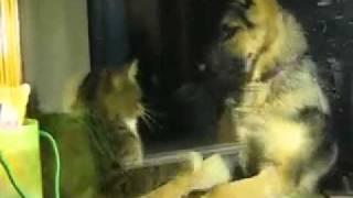 Кошка с собакой дерутся))