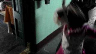 Download karimnagar small girls MP3 song and Music Video