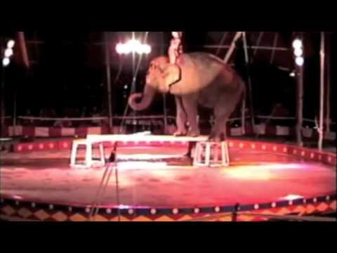 Kelly Miller Circus:  Elephant Power for Set-Up, Teardown