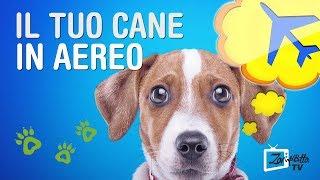 Portare un cane in aereo - come fare e che trasportino usare?
