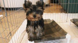 http://passerellewan.jp/puppies/?type=34.