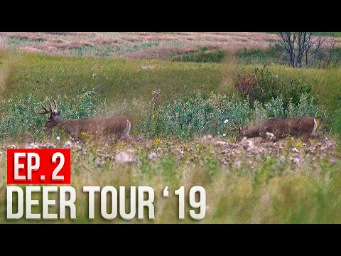 WE FOUND A BUCK NEST! - North Dakota Public Land Bowhunting | Deer Tour '19 E2
