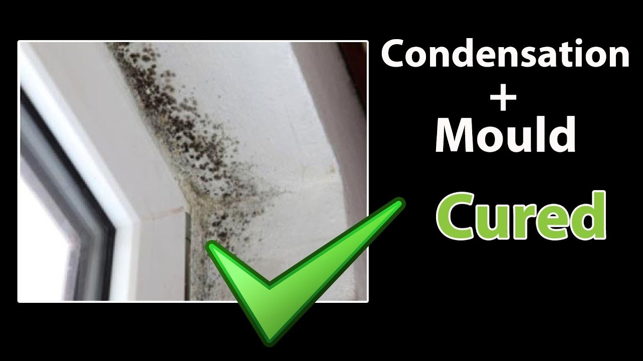 How To Get Rid Of Black Mold On Walls easy - how to stop condensation - get rid of black mold and clean
