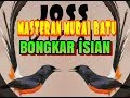 Masteran Murai Batu Bongkar Isian  Mp3 - Mp4 Download