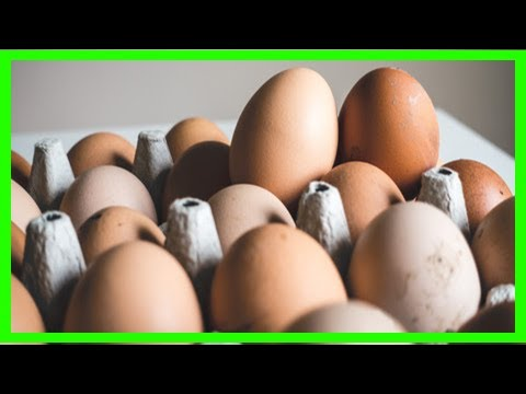 Egg scare prompts eu to consider national food safety officers News Today