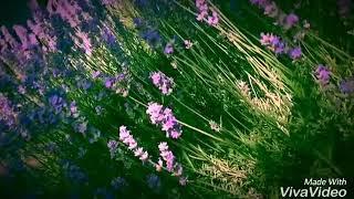 Трава-мурава... (И. Стрила) 😍