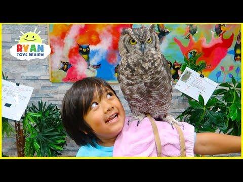 Surprise Ryan with Pet Owl!!!