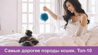 Самые дорогие породы кошек в мире-Топ 10 самых дорогих пород кошек