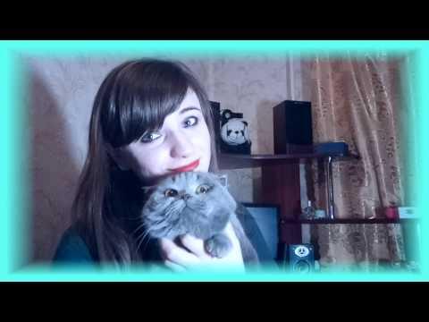 Как кормить шотландскую вислоухую кошку
