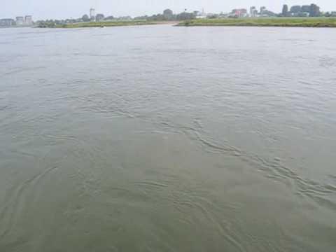 Catching Barbel on RIver IJssel