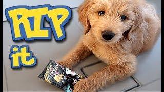 Pokemon FLIP it or RIP it (PUPPY EDITION!!)