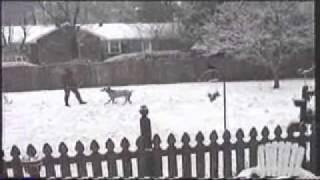 Weimaraners Loving A South Carolina Snow Day