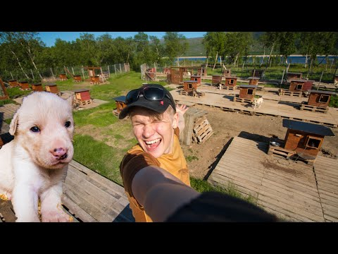 Day In The Life Owning 50 Dogs! [PUPPIES]