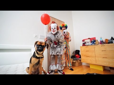 Funny PRANKS on DOG for 24 HOURS!