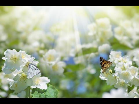 Peaceful Music, Relaxing Music, Instrumental Music, 'First Light' by Tim Janis - Поисковик музыки mp3real.ru