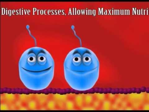 Probiotics Assignment - Vet Tech Institute