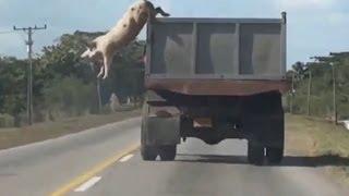 видео Свинья (2018) смотреть онлайн бесплатно в хорошем качестве hd 720