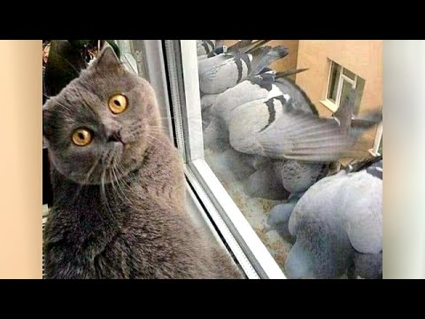 Funnier and cuter than ever - Best Animal Clips of 2021!