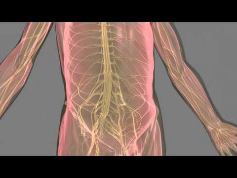 Multifocal Motor Neuropathy (MMN)