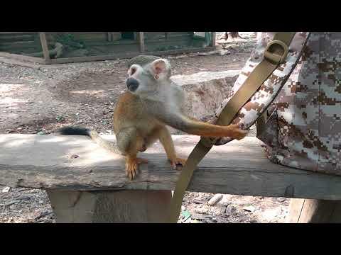 Шустрые обезьянки Южной