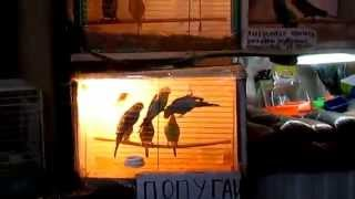 В Москве на птичьем рынке