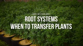 Gambar cover Root Systems and When To Transfer Plants